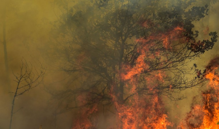 Flames burn a tree during a wildfire in Vale da Ponte, Pedrograo Grande, on June 20, 2017.The huge forest fire that erupted on June 17, 2017 in central Portugal killed at least 64 people and injured 135 more, with many trapped in their cars by the flames. / (AFP Photo/Miguel Riopa)
