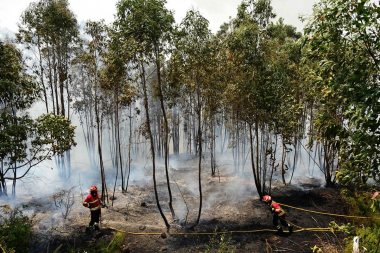 A firefighter pulls a hose as they combat a wildfire in Vale da Ponte, Pedrograo Grande, on June 20, 2017.The huge forest fire that erupted on June 17, 2017 in central Portugal killed at least 64 people and injured 135 more, with many trapped in their cars by the flames. / (AFP Photo/Miguel Riopa)
