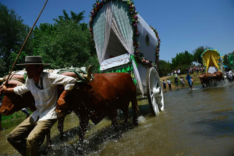 A pilgrim preceding a wagon pulled by oxen crosses the Quema river during the annual El Rocio pilgrimage in Villamanrique, near Sevilla on June 1, 2017. (CRISTINA QUICLER/AFP/Getty Images)