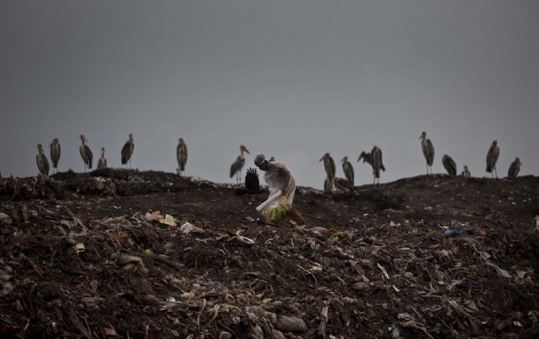 An Indian ragpicker boy searches for recyclable material as Greater Adjutant stork birds sit at a garbage dumping site on the outskirts of Gauhati, Assam state, India, Monday, June 5, 2017. Monday marks World Environment Day. (AP Photo/Anupam Nath)