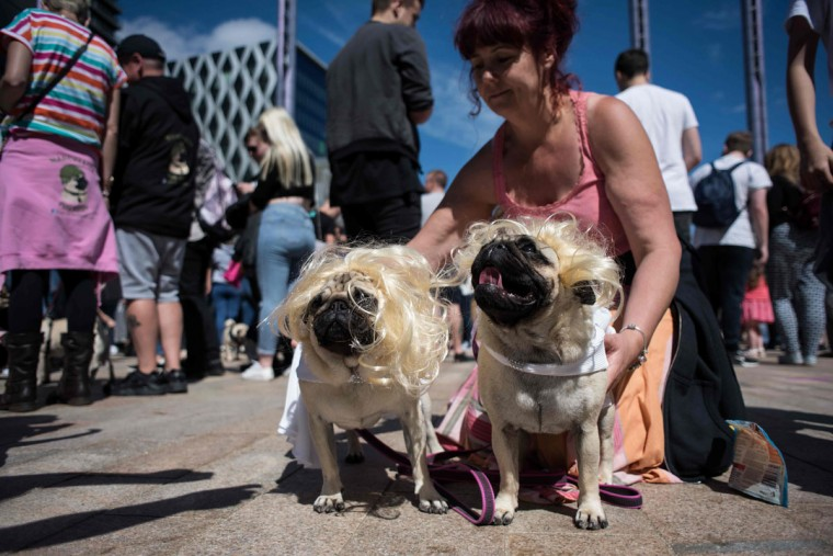 Pug dogs, dressed as Marilyn Monroe, pose for a photograph during PugFest Manchester, a festival celebrating pugs and pug cross dogs, held at MediaCityUK in Salford, Greater Manchester, northern England on July 16, 2017. (OLI SCARFF/AFP/Getty Images)