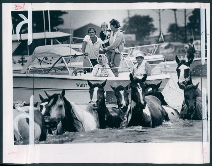 Chincoteague Island Pony Roundup, photo dated July 30, 1981. (Baltimore Sun archives)