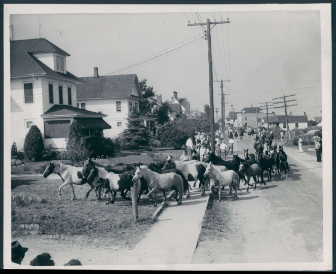 July 26, 1946 - Ponies parading down Main street of Chincoteague. Photo by Frank A. Miller/Baltimore Sun