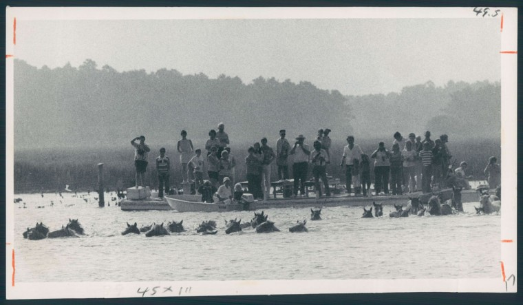 Ponies swim to Chincoteague Island as part of the annual roundup in July 1977. (Baltimore Sun archives)