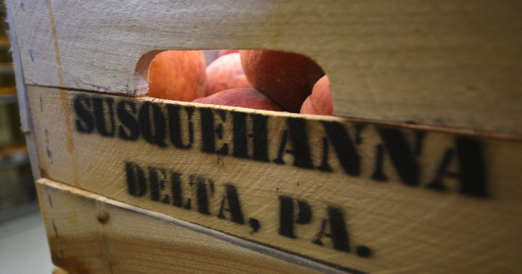 Peaches from Susquehanna Orchards of Delta, PA, await their fate at Fenwick Bakery, which has been making Baltimore peach cakes for many decades.  (Barbara Haddock Taylor/Baltimore Sun)