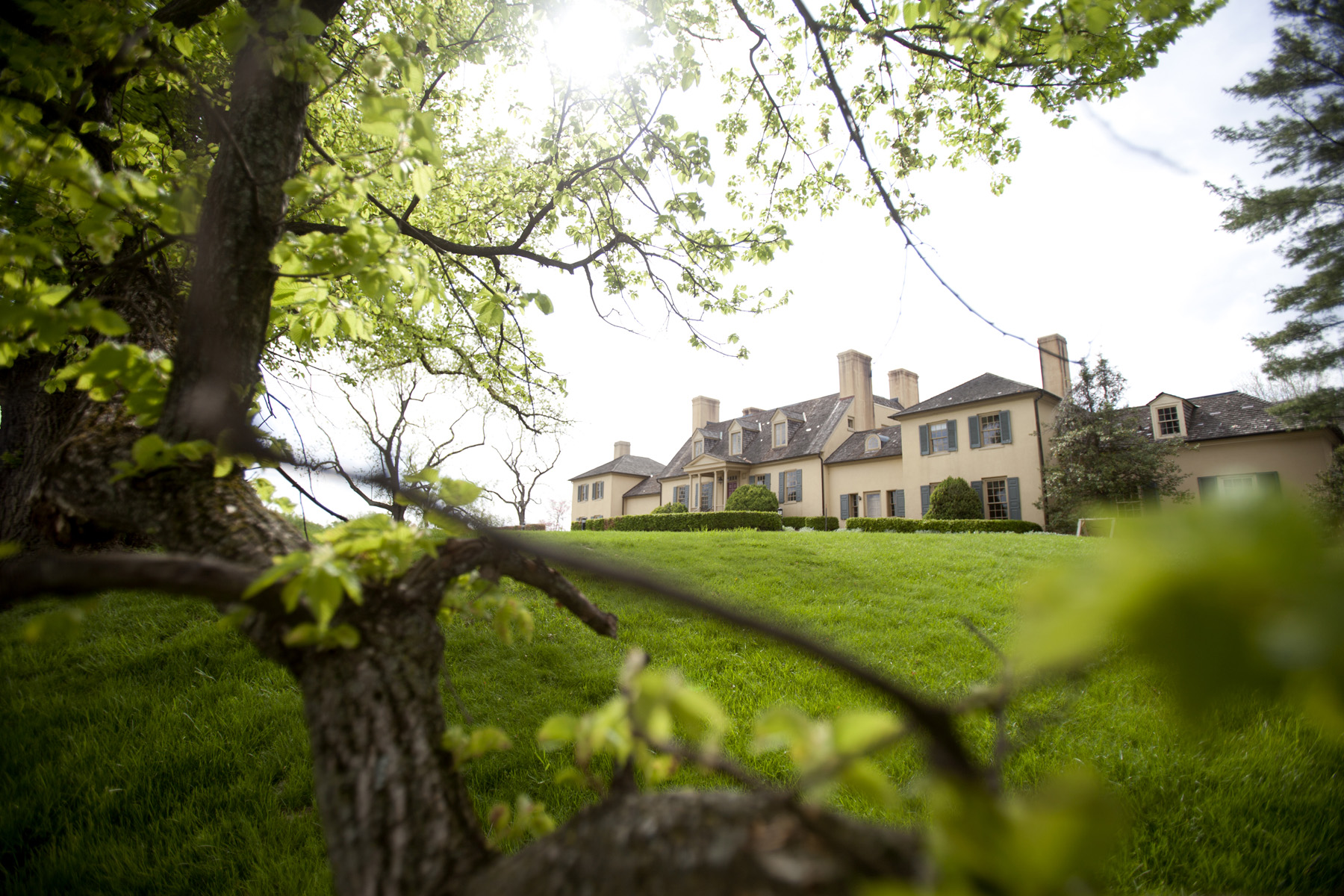 Historic Elm Tree At Belmont Manor Comes Down