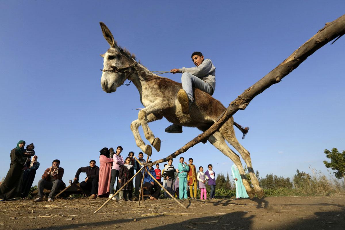 Meet Egypt's famous jumping donkey
